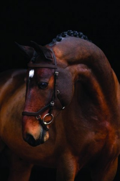Horseware Rambo Micklem Competition Bridle Trense braun WB Standard Horse